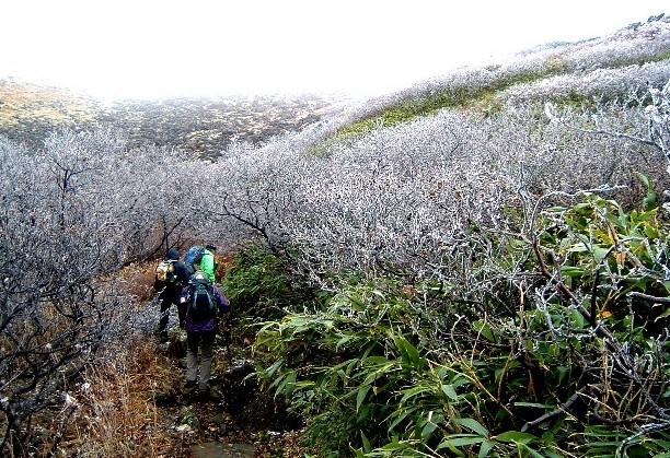 0801012鳥海山薊坂付近霧氷 017a.jpg