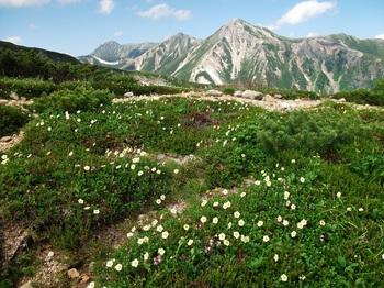 鷲羽岳とお花畑DSCF4806a.jpg