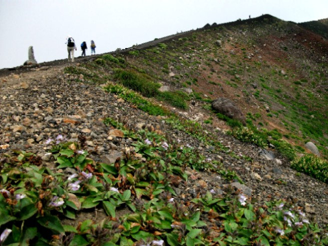 100809岩手山イワブクロの山稜 058a.jpg